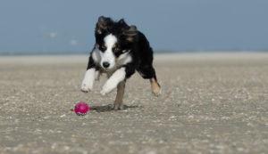 Hond-op-Ameland